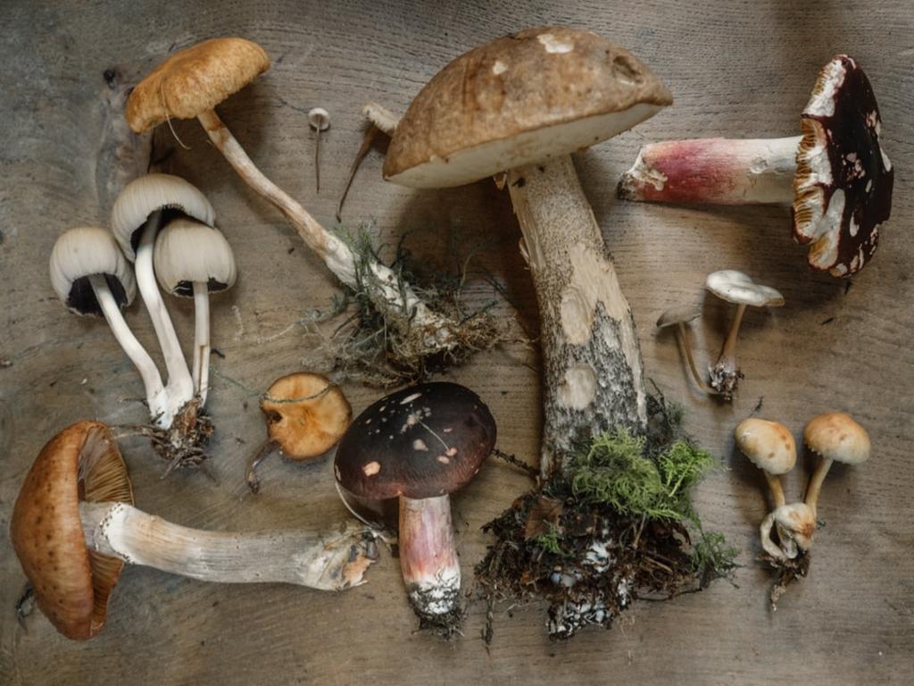 Los hongos serán el alimento que nos salve en el futuro: UNAM