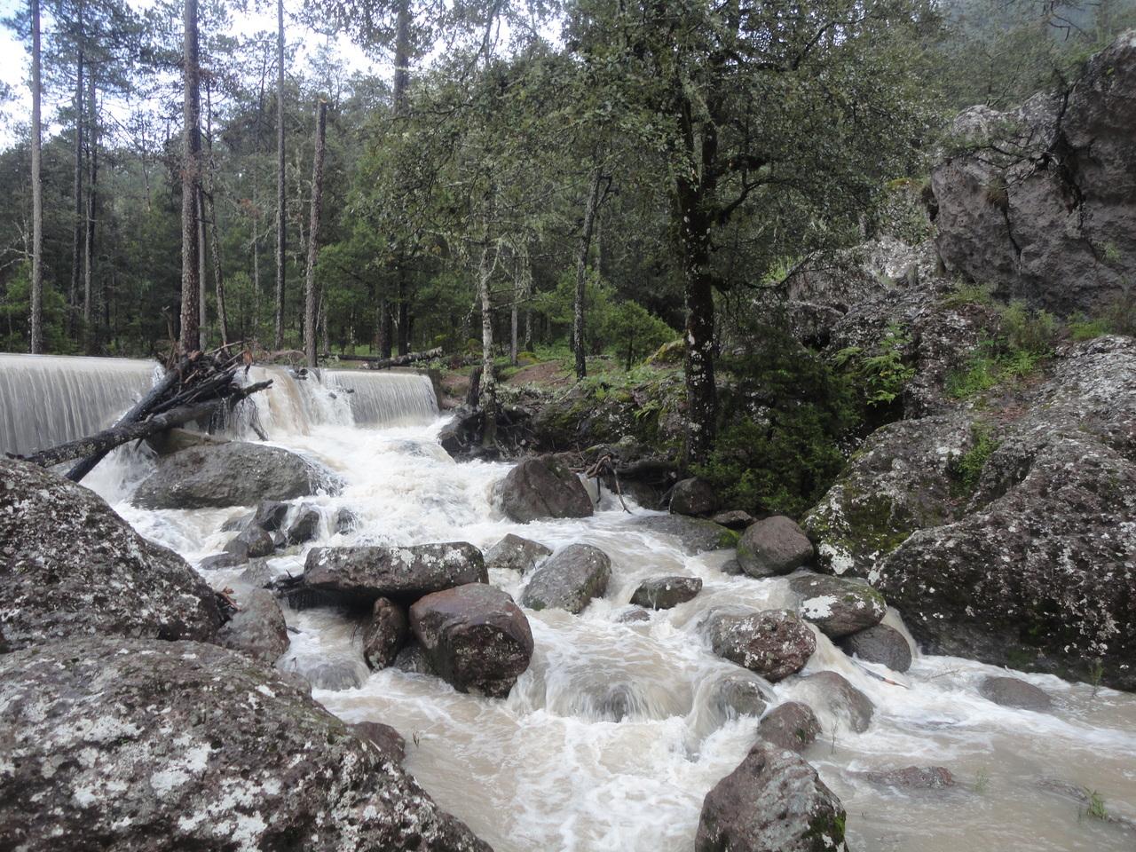 Monzón de Norteamérica está presente en Durango