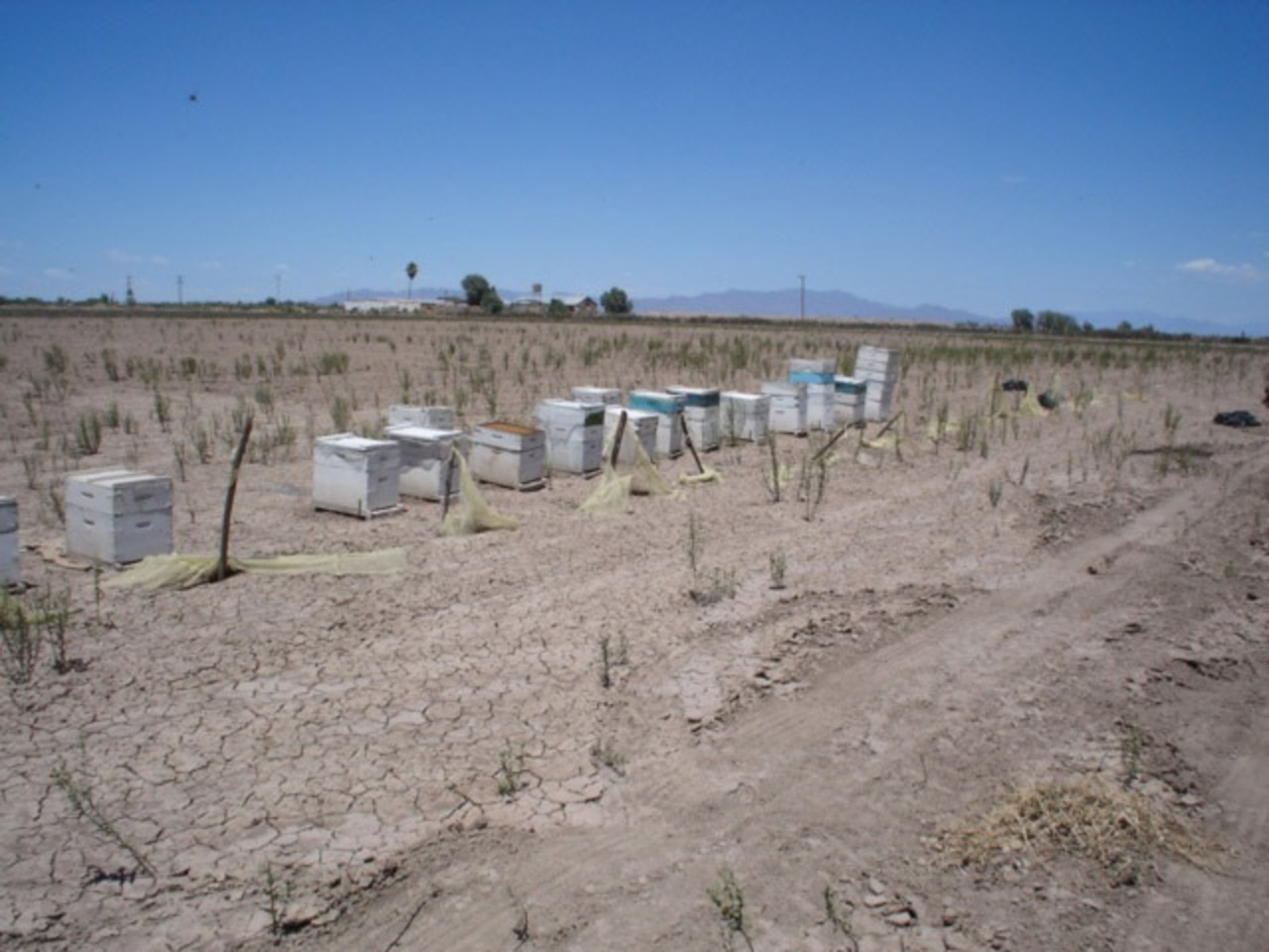 Produce Durango 125 toneladas de miel en lo que va del 2021