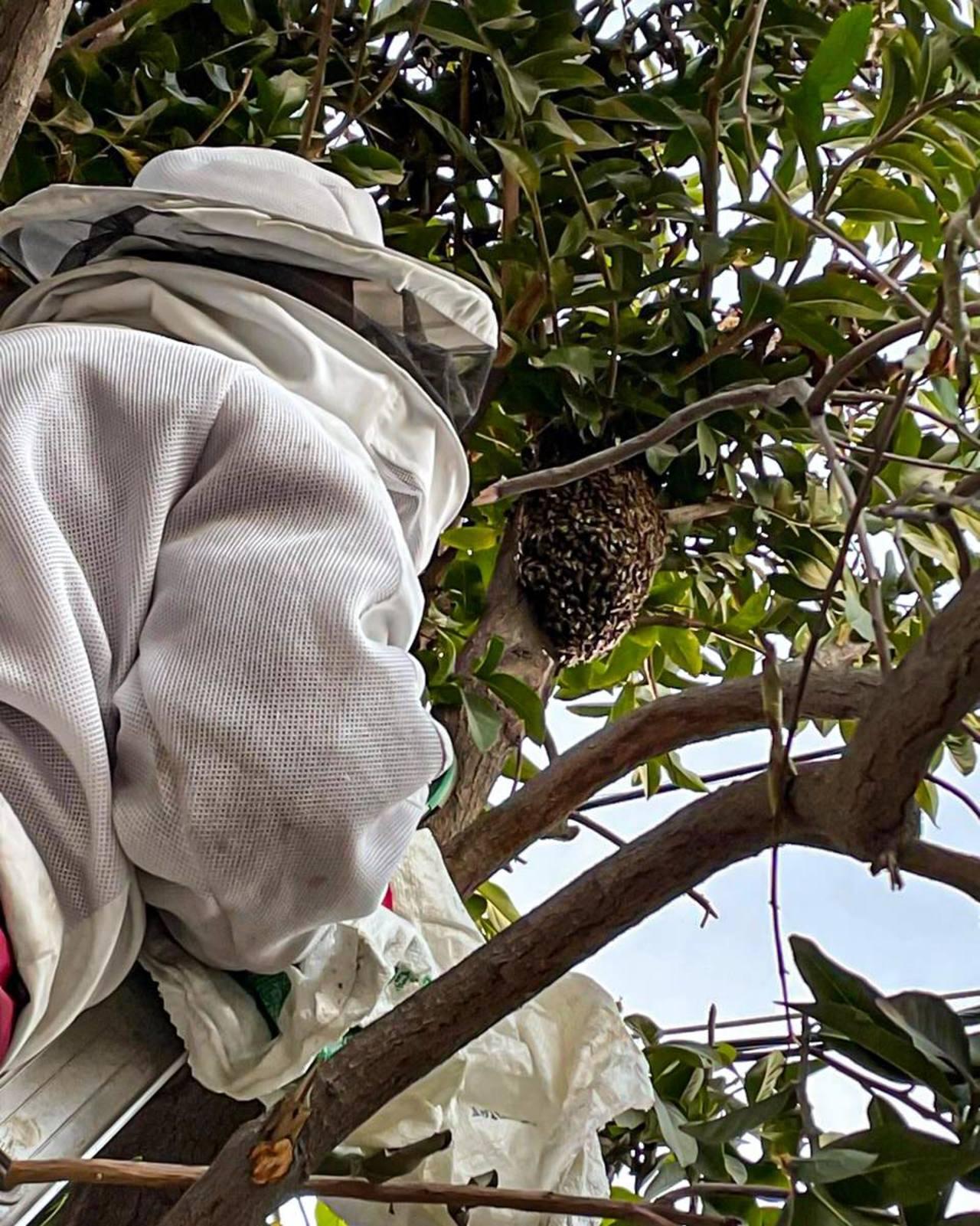 Llaman en Gómez Palacio a preservar las abejas