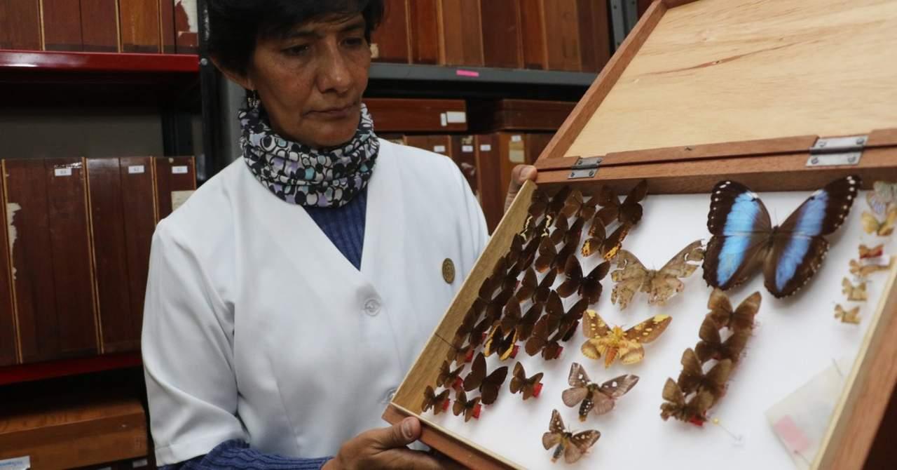 Bióloga, guardiana y madrina de una decena de insectos en Bolivia