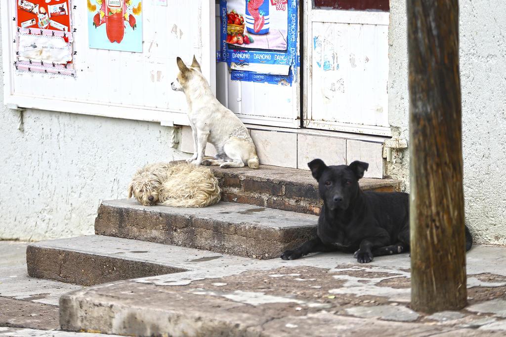 Jauría de perros ataca a pobladores en Chiconcuac, Edomex; un hombre muere por las heridas