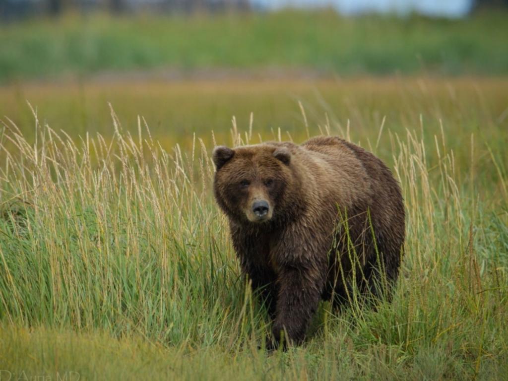 Pareja rusa asegura haber pasado diez días en el bosque eludiendo a un oso