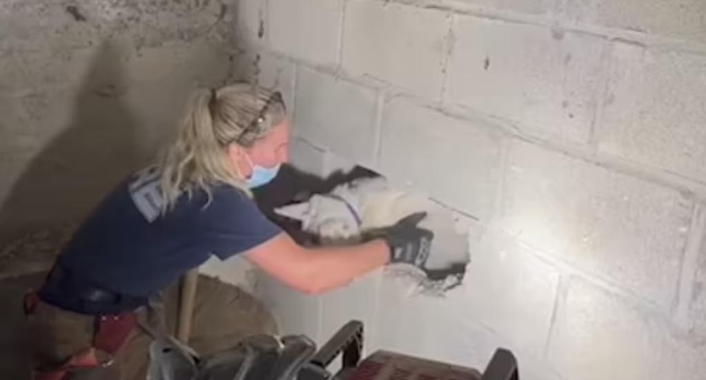 Bomberos rompen pared de concreto para rescatar a una perra que estaba atrapada