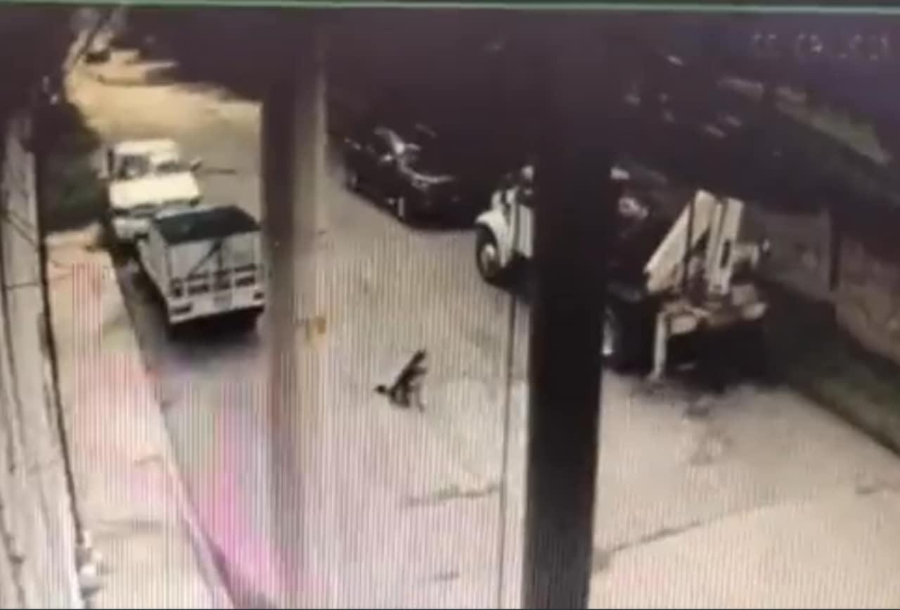 VIDEO: patrulla de Policía atropella a perrito 'Rolo' en Melchor Ocampo, Edomex