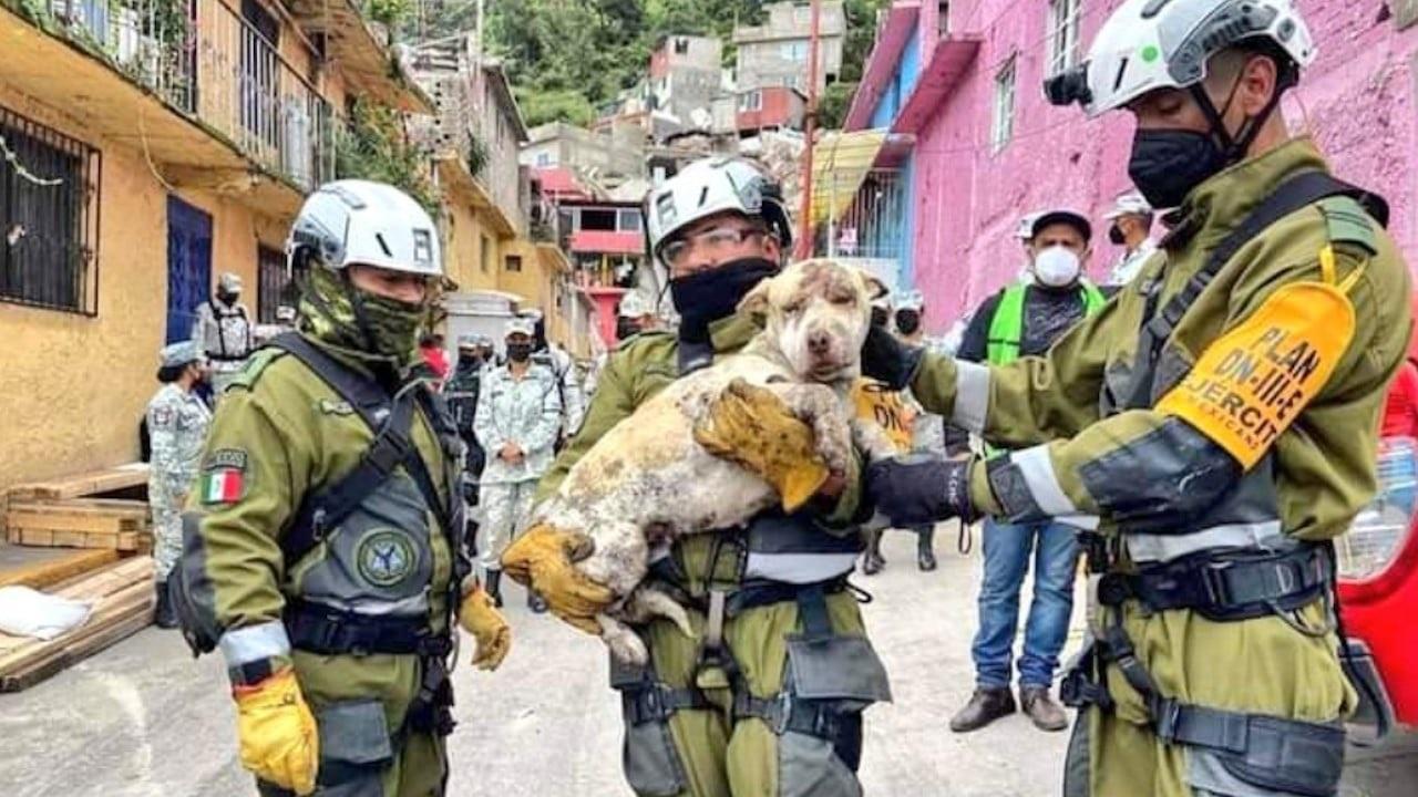 Por lo menos 40 mascotas fueron rescatadas en la zona del Chiquihuite
