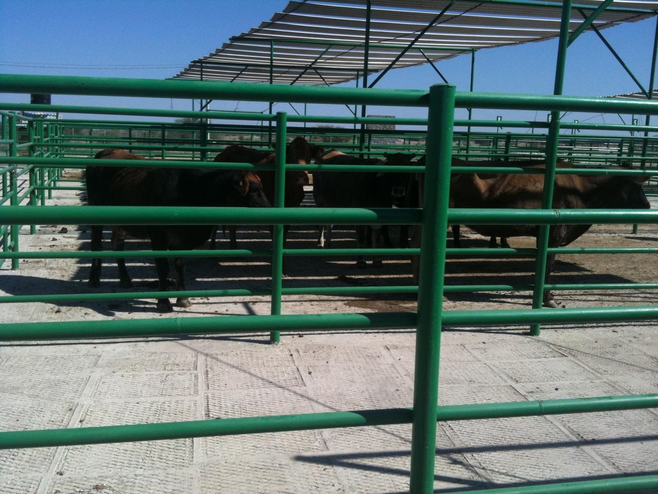 Durango reporta producción de 75 mil toneladas de carne de res