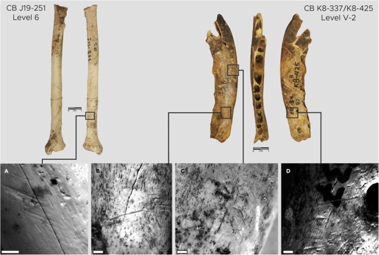 Investigadores descubren herramientas de hueso para fabricar ropa de hace 120 mil años